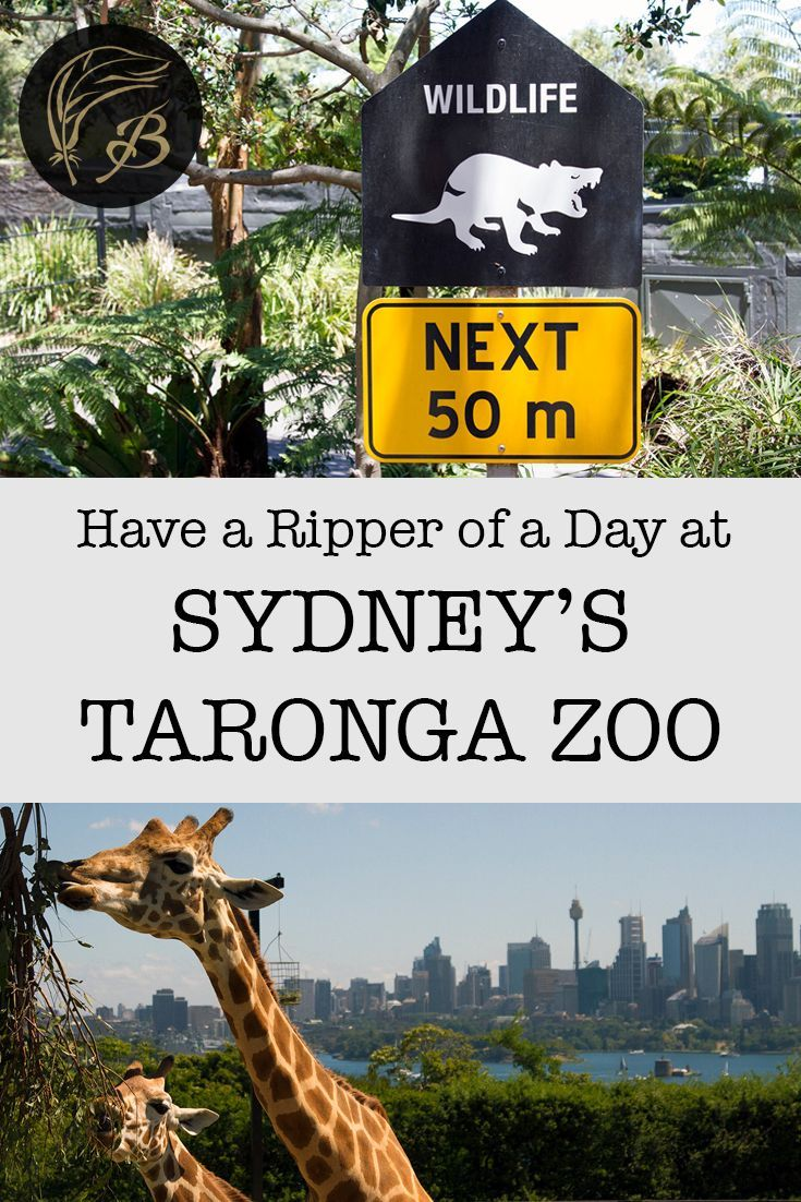 A strong commitment to conservation, a wide range of animals and breathtaking harbour views - here's why you should visit Sydney's Taronga Zoo in Australia.