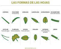 nombres de hojas de plantas