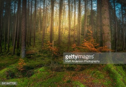 Bildbanksbilder : Magical Forest