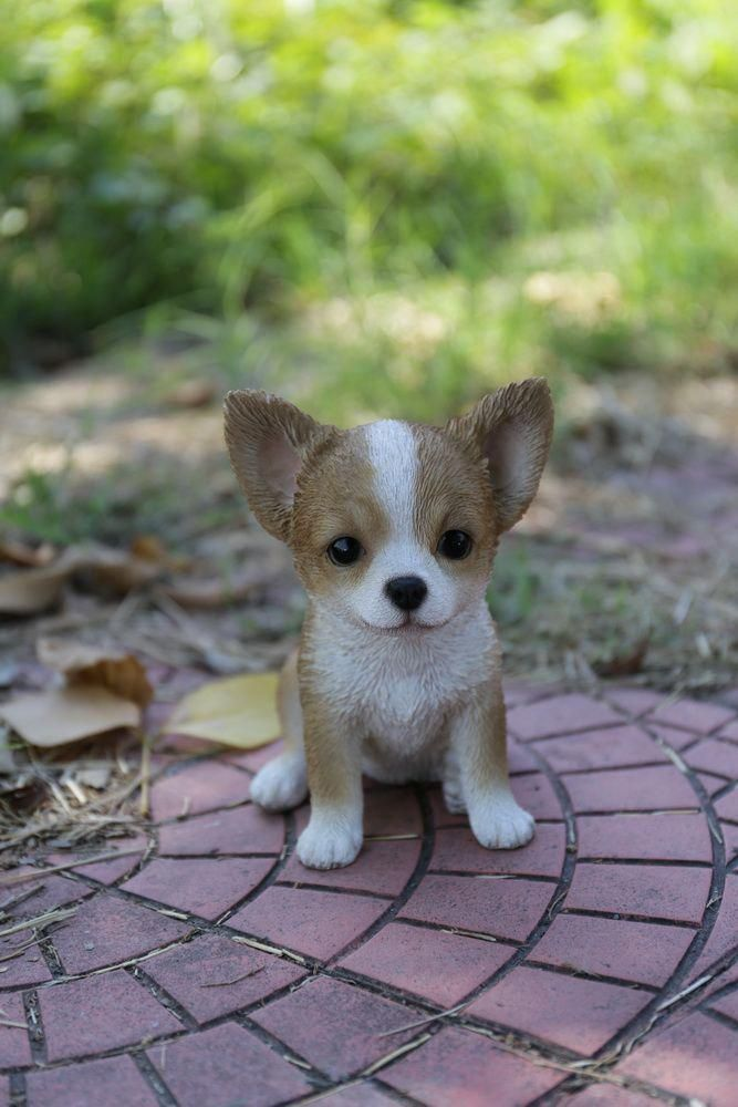 Brown And White Chihuahua Puppy Statue Huskysibirian Chihuahua