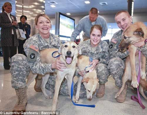 """God bless America! """"With slobbery licks and kisses, 14 stray dogs from war-torn Afghanistan were reunited Wednesday with the US service members who cared for them. The dogs were flown to the US by British charity Nowzad Dogs."""": Military Animal, Nowzad Charity, Dogs Reunited, Strayed Dogs, Afghanistan Dogs, Dogs Esp, Dogs Befriend, Military Rescue, Jfk Airports"""
