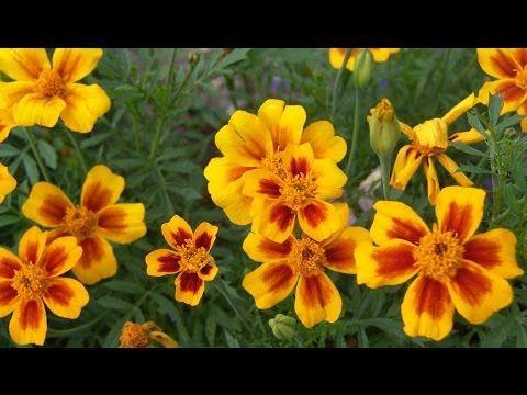 Семена цветов. Сроки посева семян - YouTube