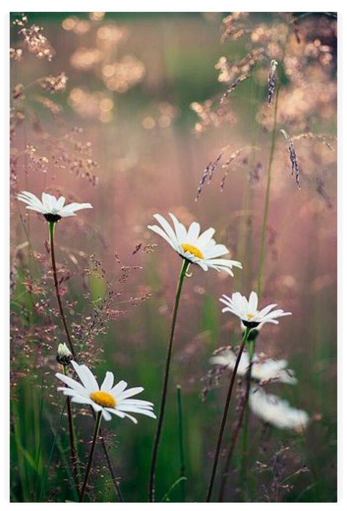 Pro milovníky přírody jsou nejkrásnější zásnuby ty, které se konají v přírodě.