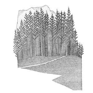 Nigel Peake 'The Forest'