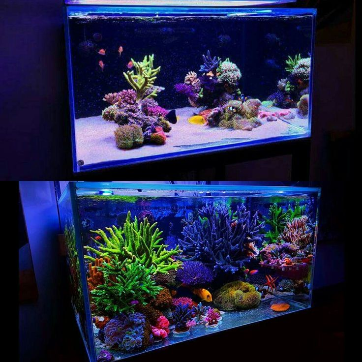 The 25+ Best Reef Aquascaping Ideas On Pinterest