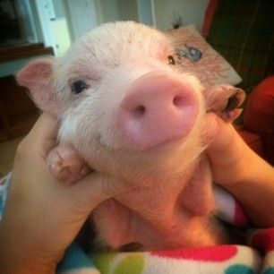 They've got infectiously cheerful dispositions. | 16 Reasons Pigs Make The Best Pets