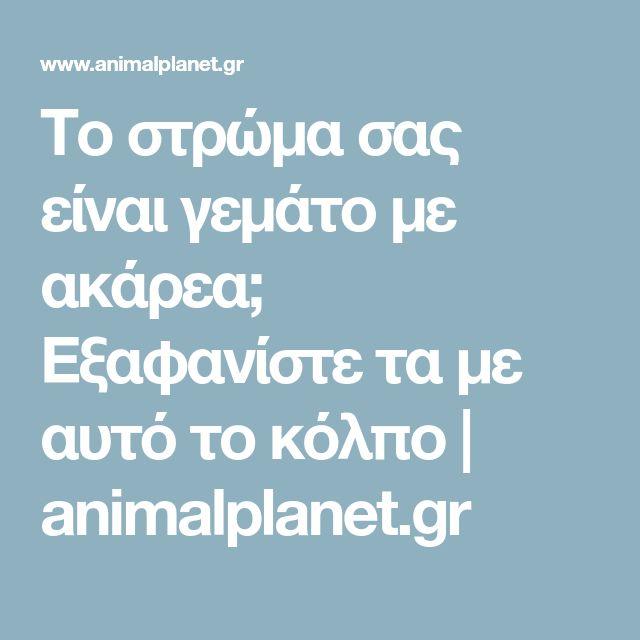 Το στρώμα σας είναι γεμάτο με ακάρεα; Εξαφανίστε τα με αυτό το κόλπο   animalplanet.gr
