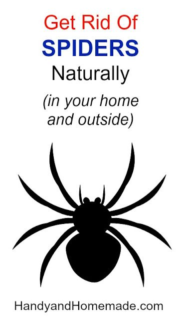 chrome hearts beanie How To Get Rid Of Spiders Naturally In Your Home And Outside