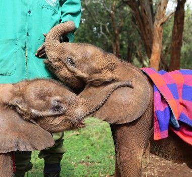 Garments for Good: World Elephant Day – J.Crew Blog