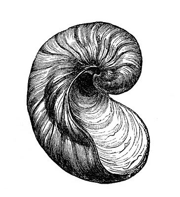 Vintage Clip Art Images - Seashells - The Graphics Fairy