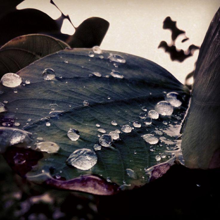 Early morning dew beauty
