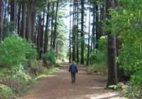 One of my favourite walks this glorious morn - Newlands Forest :-)