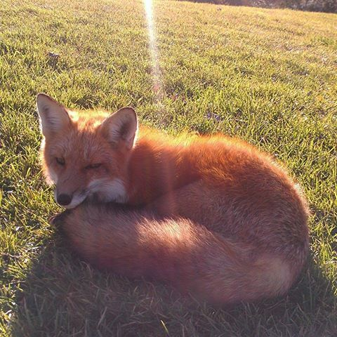 Brigantine Fox At The Links Beach Housefo