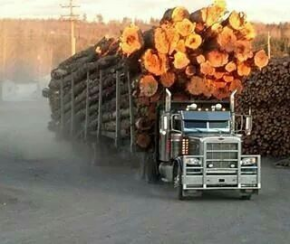 Peterbilt custom 389 with a huge load of logs
