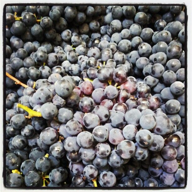 Coronation Grapes from the Okanagan have just arrived at Pizzeria Prima Strada Bridge!
