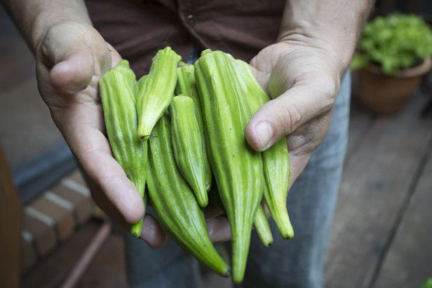 Frozen blanched okra works well in gumbo, boiled, stewed, smothered, or fried. How to freeze your harvest --> http://www.hgtvgardens.com/freezing/how-to-freeze-okra?soc=pinterest