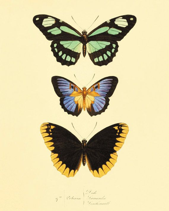 Green black Vintage Butterfly Print Nature print Natural