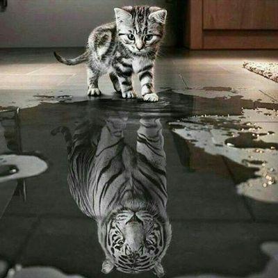 """The kitten represents Kate after Petruchio """"tames"""" her- she used to be the tiger in the reflection"""