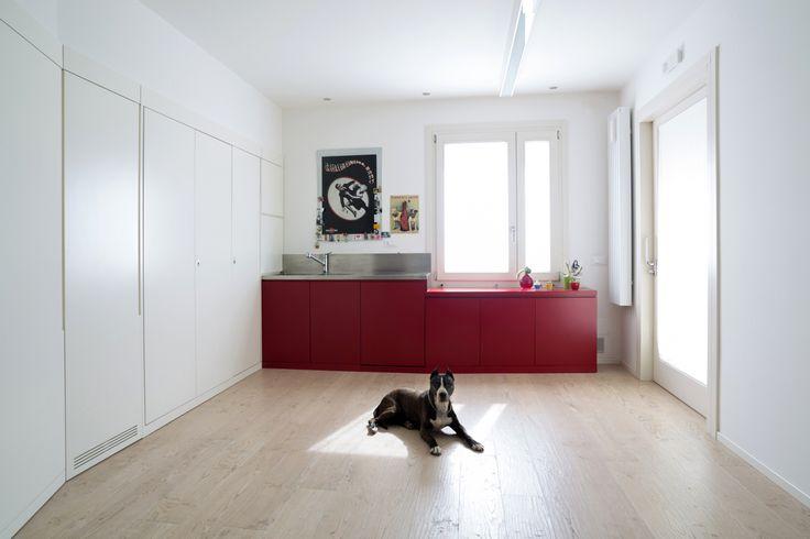 Dog and the kitchen photo Stefania Garatti