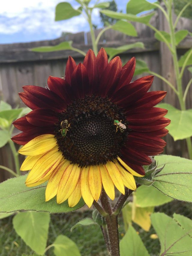 Well You Don T See That Everyday 35 Pics In 2020 Sunflower Plants Garden