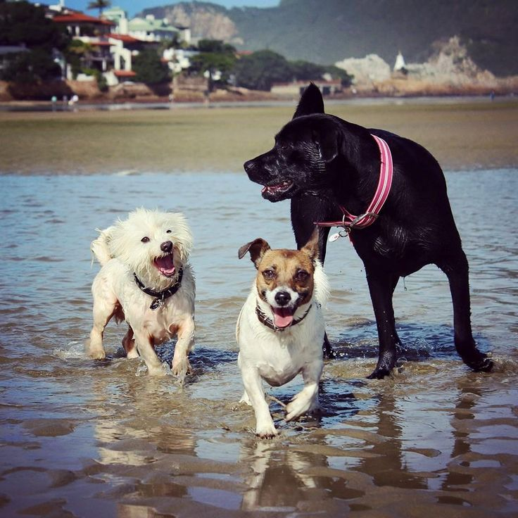 More pack beach exercise. #thecuteststeve