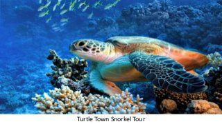 Deep Sea Fishing in Gulf of Mexico Turtle Town Snorkel Tour Key West Day Trip With Glass Bottom Boat Ride Key West Day Trip & Parasailing Muir Woods and San Fr…