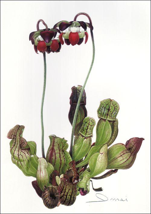 Botanische Illustratie Geschiedenis