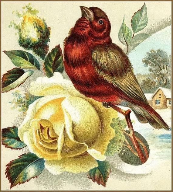 Red Winter Bird and Yellow Rose Downloadable, Printable, Digital Art Image