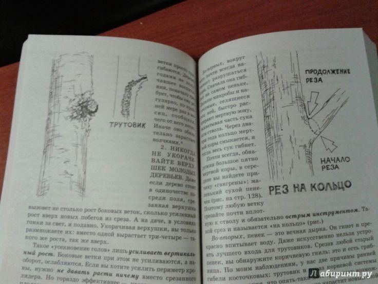 Иллюстрация 12 из 12 для Умный сад в подробностях - Николай Курдюмов | Лабиринт - книги. Источник: v