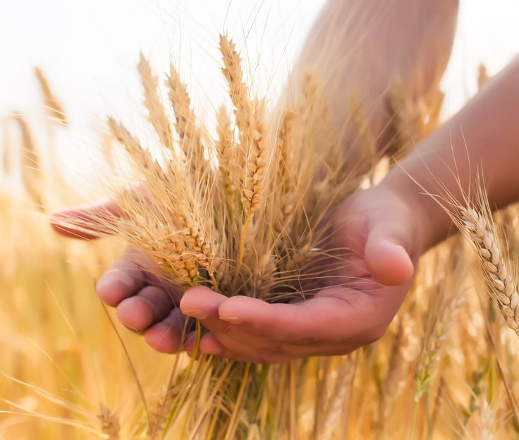 """Hi Ladies~Today let's pin a """"Country Wheat Farm"""" inside and out in the soft colors of wheat. God Bless, Katie"""