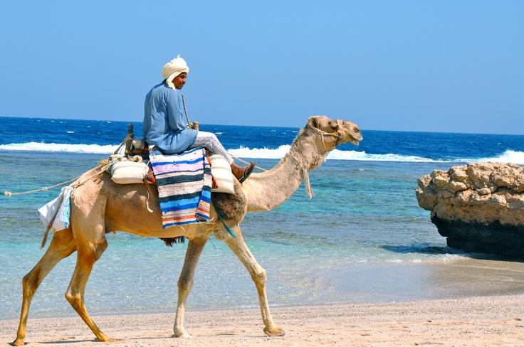 Camel #Tigadigadou