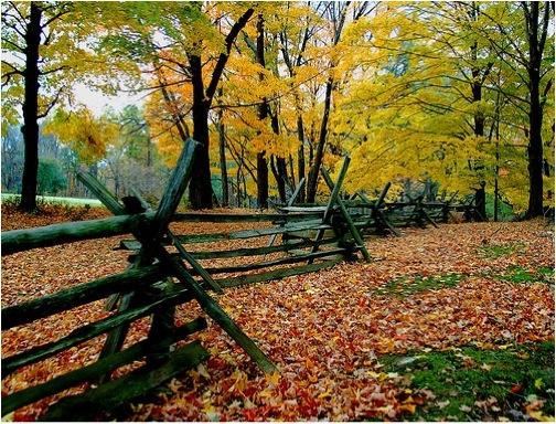 66 Best Fences Images On Pinterest Garden Fences Garden