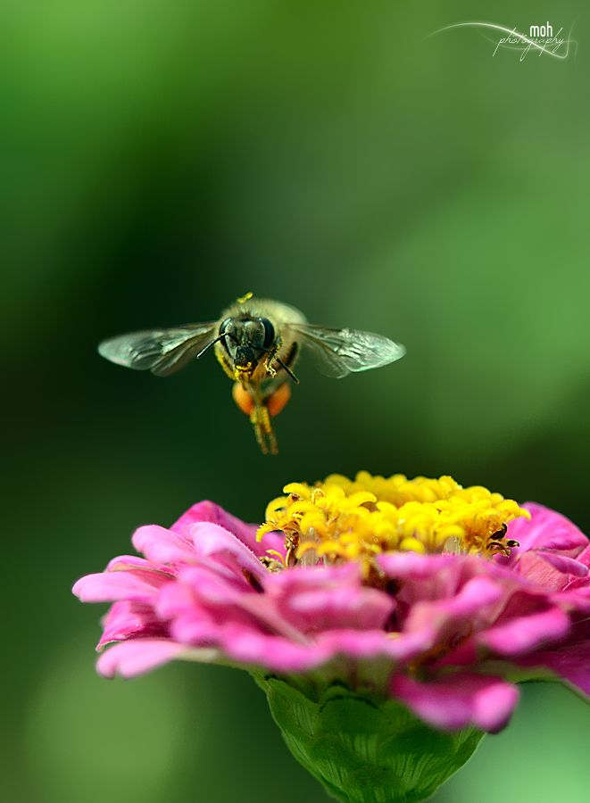 Still Flying :) by Mohan Duwal, via 500px
