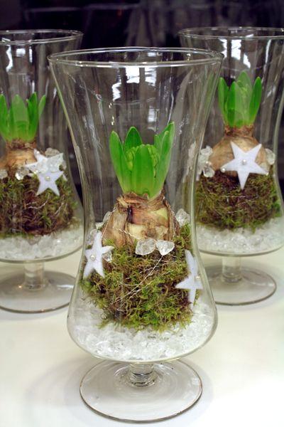 http://holmsundsblommor.blogspot.se/2013/11/hyacinter-i-glas.html Vit hyacint i glas med mossa och stjärnor