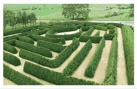 The Mintaro Maze in Clare Valley, South Australia. Interesting triangular hedge…