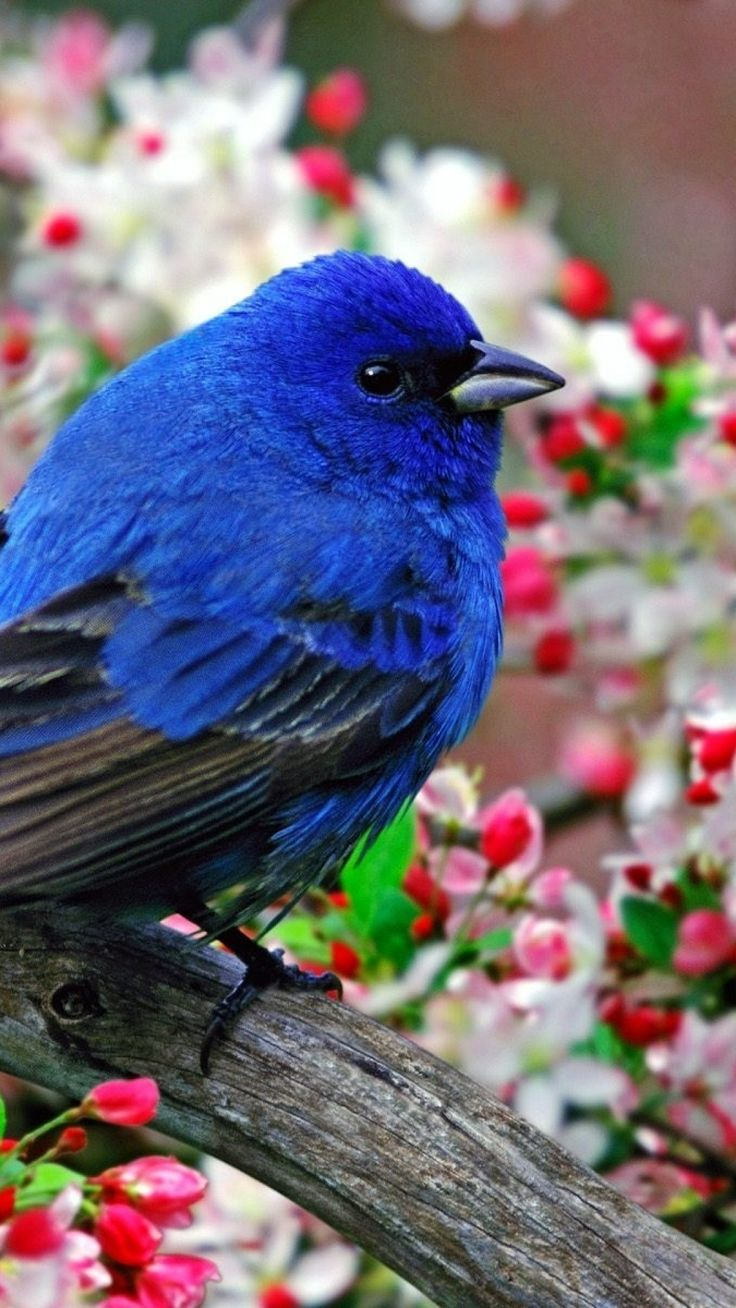 I WONDER WHY IT IS THAT THE BIRDS ALL AROUND THE WORLD, ARE ALWAYS SO BEAUTIFUL, WITH SUCH AMAZING COLOURING!!