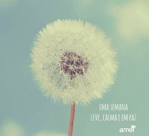 Bom dia #lojaamei #bomdia #sejaleve #muitoamor