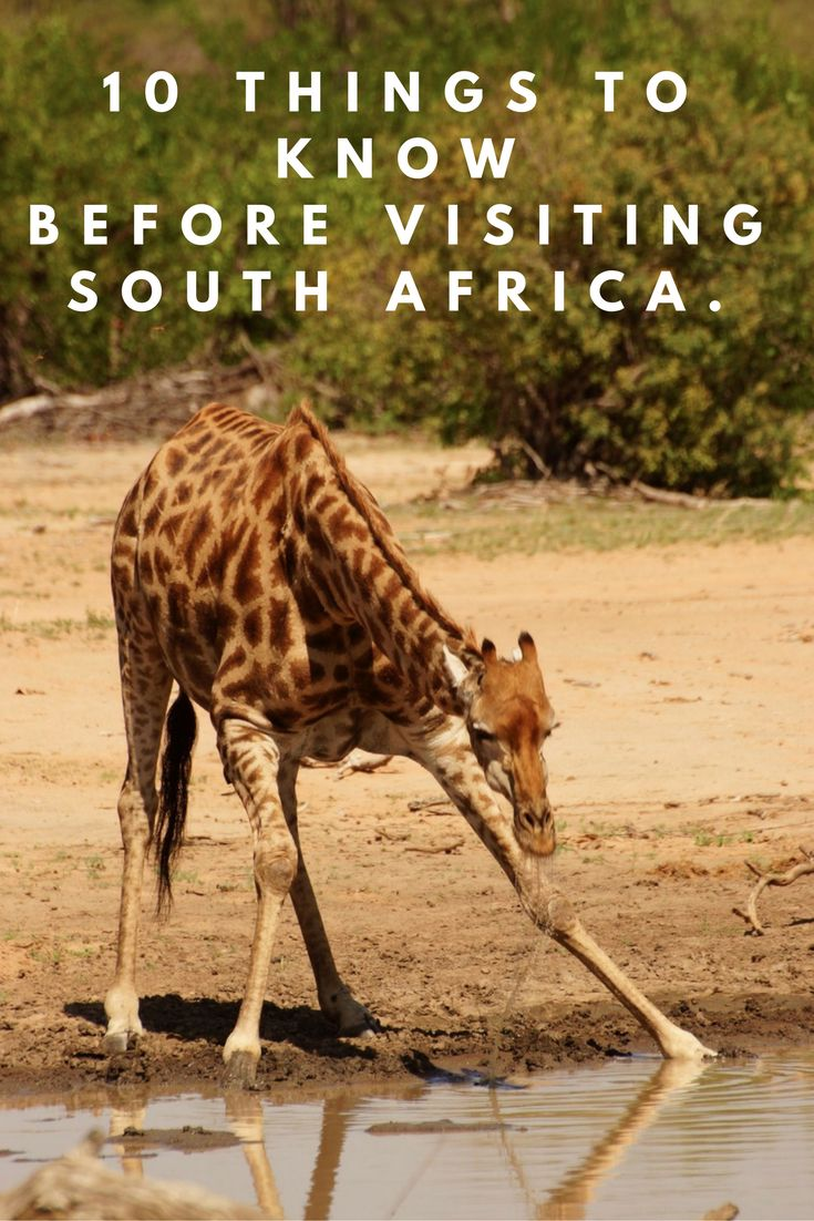 Things to know before visiting South Africa | Tips for travelling | 10 things to know | South Africa Travel