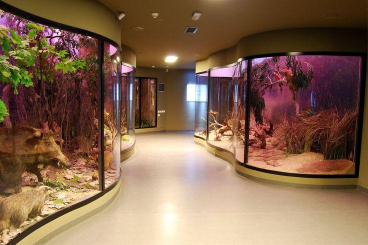 muzeu de stiinte naturale sibiu - Căutare Google