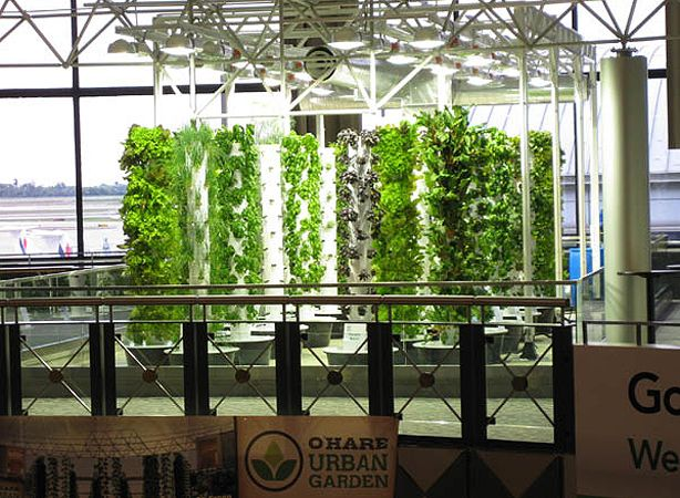Vertical garden in O'Hare AirportO' Harness Airports, Vertical Farms, Ohare Airports, Urban Gardens, Vertical Gardens, Hydroponics Urban, Airports Vertical, Airports Chicago, Airports Farms
