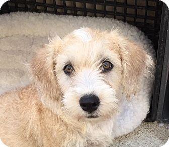 Dog Adoption Near Long Beach Ca
