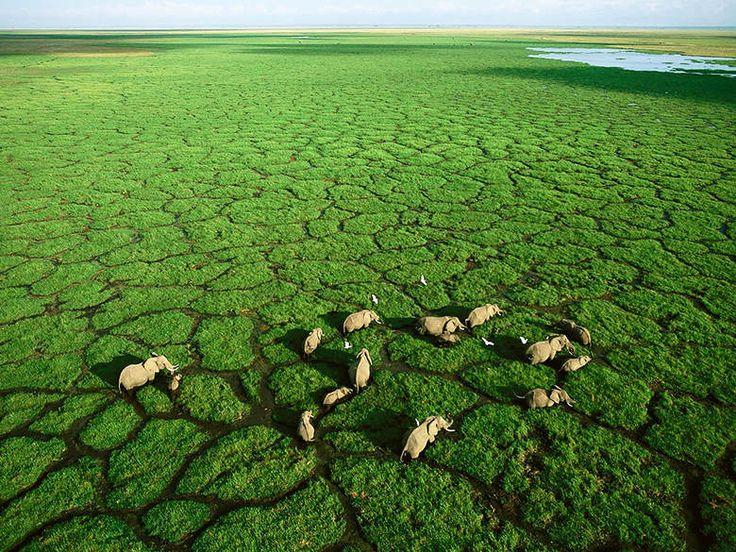 Les parcs nationaux du Kenya