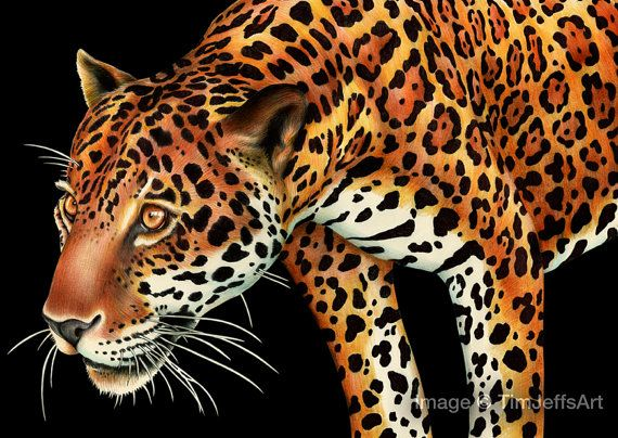 Jaguar Colored Pencil Drawing