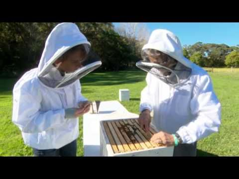 Propolis - Your Immune System's Secret Weapon - YouTube