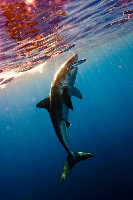 Shark Hunt by Michael Muller