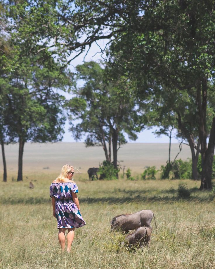 Anyone know how to say warthog in Swahili? Ill give you hint...go watch The Lion King  #GovernorsCampCollection #HashtagAfrica #IntoAfrica