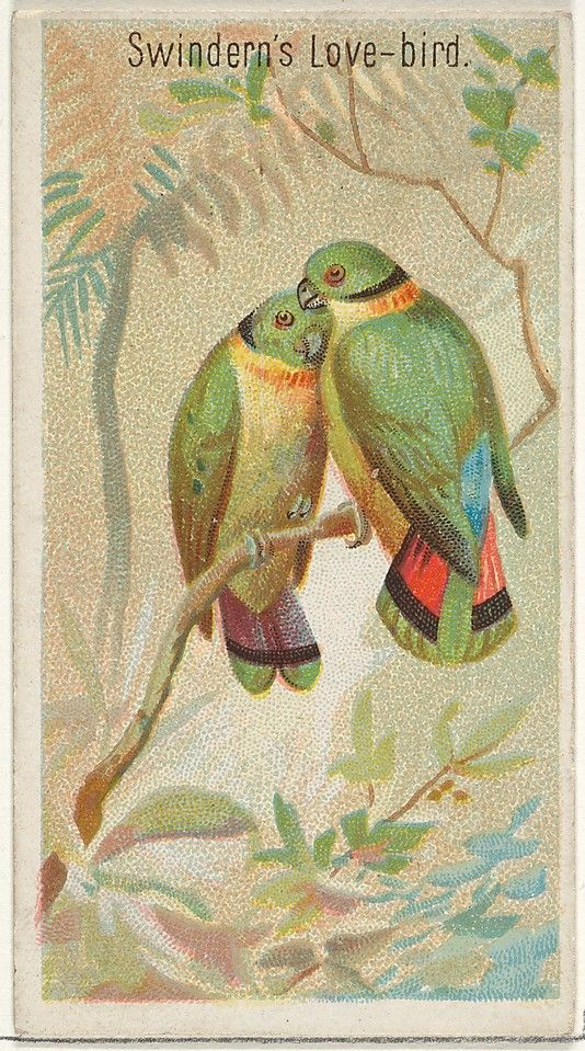 Issued by Allen & Ginter (American). Swindern's Love-Bird, from the Birds of the Tropics series (N5) for Allen & Ginter Cigarettes Brands, 1889. Lithographer: George S. Harris & Sons (American). The Metropolitan Museum of Art, New York. The Jefferson R. Burdick Collection, Gift of Jefferson R. Burdick (63.350.201.5.7)