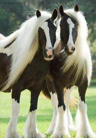 HORSES!!!                                                                                                                                                                                 Más