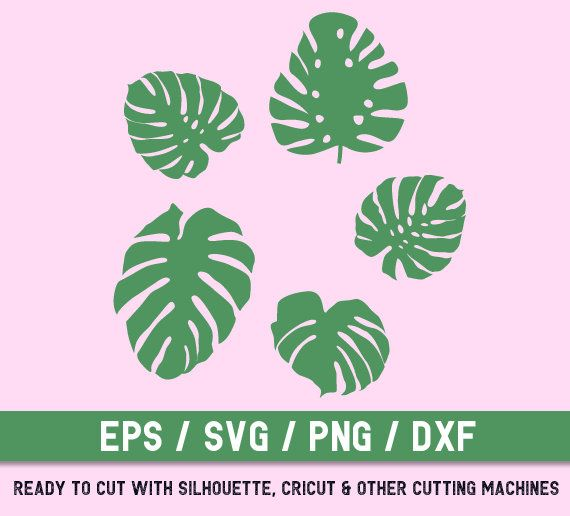 Monstera svg, Monstera Leaves cut file, Tropical Leaves svg ...