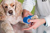 Dog Bite Treatment | Cesar Millan